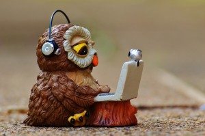 owl-947741_1280